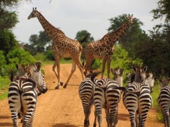 3 Days Zanzibar Safari Package