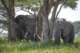 7 Days Tanzania Jungle Safari Package