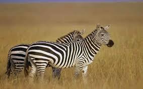 10 Days Tanzania Wild World Package