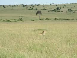 3 Days Amboseli Camping Safari Package