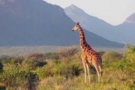 7 Days Best of Kenya Safari Package