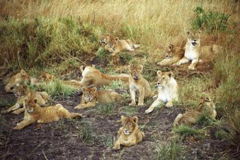 3 Days Masai Mara Safari Tour Package