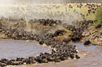 4 Days Masai Mara Wildebeest Migration Package