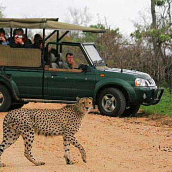 4 Days Classic Tanzania Safari Package