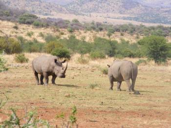 Pilanesberg Game Reserve - Big 5 Package