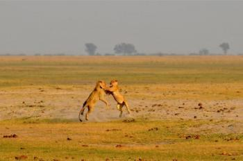 7 Day Okavango and Chobe Trail Package