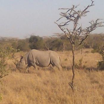 8 Days Kenya,Tanzania Safari Package