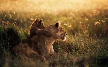 10 Days Discover Kenya and Tanzania Package