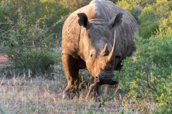 Botswana Wildlife Classic Package