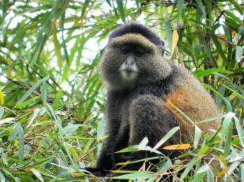 11 Days Safari Tour to Uganda and Rwanda Package