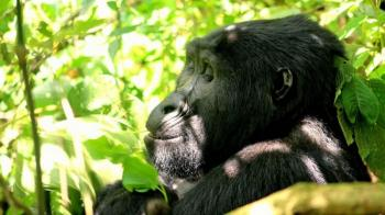 16 Days Magical Experience Tour to Uganda Package