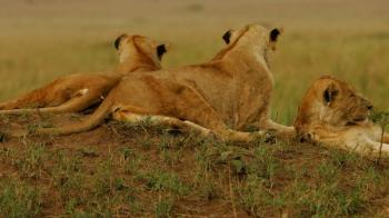 19 Days Incredible Wildlife Safari in Uganda Package