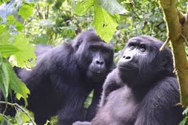 4 Day Kigali and Gorillas Tour Package