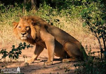 14 Day Wild Zambia Group Tour Package