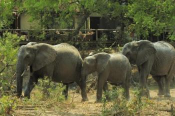 3-day Private Manyeleti/letaba Walking Safari Package