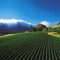 Cape Winelands Tour  Package