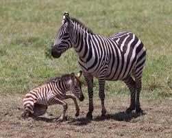 12 Days Tanzania Wildlife Photography Itinerary Package