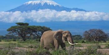 16 Day Kenya, Tanzania and Rwanda Experience Package
