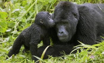 10 Day Roaming Rwanda Safari Package