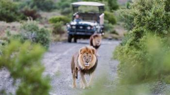 9 Day Johannesburg, Kruger National Park, and Cape Town Safari Package
