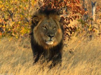 Garden Route Sa, Rwanda, Uganda Gorilla & Safari Tour, Tanzania Safari Tour