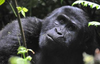 3 Day Uganda Gorillas and Tree-climbing Lions Flying Safari Package