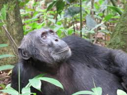 8 Day Team Rwanda Guided Congo Nile Trail Mountain Bike Tour & Chimpanzee Trek Package