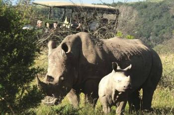 Full Day Hluhluwe-Imfolozi Park Tour Package