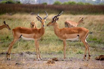 6 Day Kruger Park Family Safari Package
