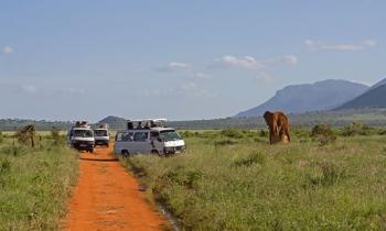 3 Days Mombasa Safari to Tsavo East and Amboseli Ending in Nairobi Package