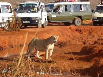 4 Days Safari from Mombasa to Tsavo East, Tsavo West and Amboseli Ending in Nairobi Package