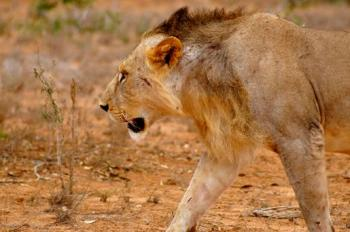 6 Days Mombasa Safari to Tsavo East, Amboseli, Lake Nakuru and Masai Mara Ending in Nairobi Package