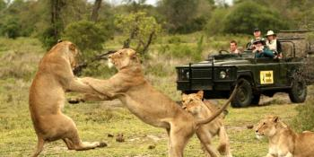 Kruger Park Safari Package
