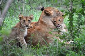7 Day Kruger Park Safari Packages