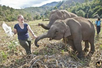 Elephant Interaction and Ride Package