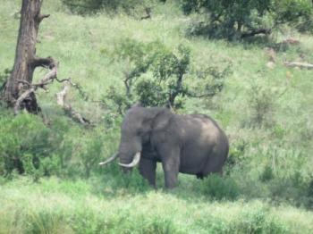 Kruger National Park Day Safaris Package