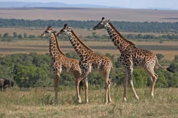 01 Day Tanzania Safaris Package