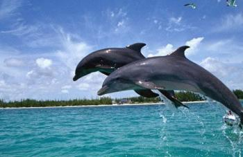 African Dolphin Safari Package