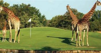 Golf Safari in Kenya Package