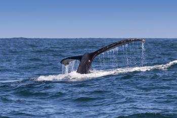 Whale and Winelands Tour Package