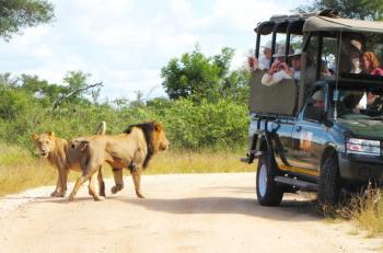 Kruger National Park Guided Drives Package