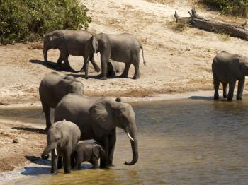 Chobe Day Trip From Victoria Falls Or Livingstone Package