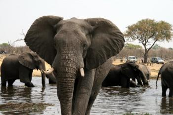 Victoria falls to Chobe National Park Package