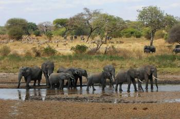 Two Nights Three Days Safari Package
