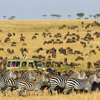 Serengeti Migration Safari Package
