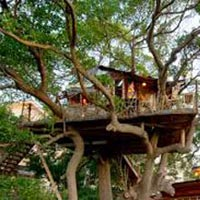 Wayanad Tour with Vythiri Treehouse Tour