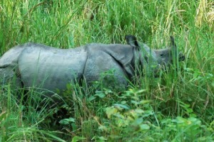 Chitwan Jungle Safari Package
