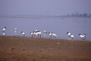 Koshi Tappu Wildlife Reserve Package