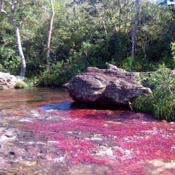 Rainbow River Caño Cristales Package