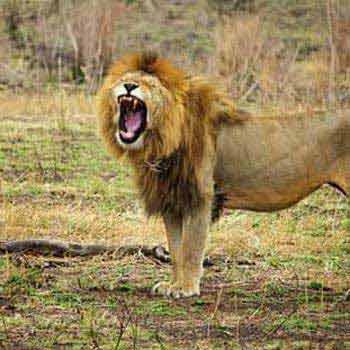 6 Days Lodge Safari Masai Mara-Lake Naivasha-Lake Nakuru-Amboseli Tour
